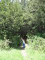 Дендрологічний парк 135.jpg