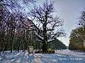 Кочубеївські Дуби у Регіональному ландшафтному парку Диканський 4.jpg