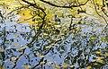 Крижень у Іонічному морі.jpg