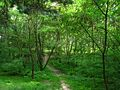 Лес из окации - panoramio.jpg