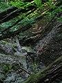 """Лісове джерело. """"Купалка"""" кабанів.jpg"""