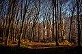 Лісогринівецьки ліс. осінь 2017.jpg