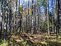 Нургуш. Заповедный лес.jpg