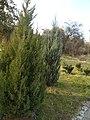 Олександрія - panoramio (39).jpg