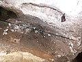 Печера Вертеба, Борщівський район, Більче Золоте.11.jpg