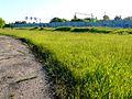 Полянка на краю стадиона «Красное знамя» у Петропавловского парка — Ярославль - panoramio.jpg