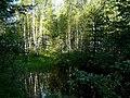 Прудик в лесу под Ярославлем - panoramio.jpg