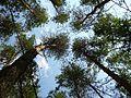 Сосновый бор - panoramio (7).jpg