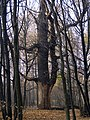 Украина, Киев - Голосеевский лес 143.jpg