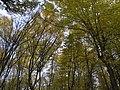 Украина, Киев - Голосеевский лес 63.jpg
