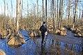 Черемське болото - panoramio (2).jpg