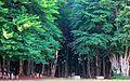 Шума , Forest.JPG