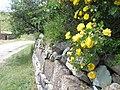 Արփենիի գյուղական ճանապարհներից.jpg