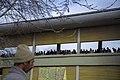مسابقات اسب دوانی گنبد کاووس Horse racing In Iran- Gonbad-e Kavus 49.jpg
