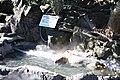 カピバラ温泉 (3273063761).jpg