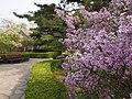 丁香花开 - Lilac Blossom - 2012.04 - panoramio.jpg