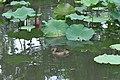 中国江苏省苏州市平江区 China Jiangsu Suzhou City, Province, Pingji - panoramio (3).jpg