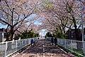 北海道道1148号札幌恵庭自転車道線 (白石こころーど) - panoramio.jpg
