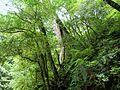拉拉山森林保育區 Lalashan Forest Reserve - panoramio (1).jpg