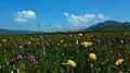 热尔大坝草原Rerdaba grassland - panoramio (8).jpg