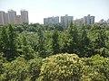 西安森林 - panoramio.jpg