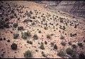001 Grand Canyon Aerial of Burro Damage 1975 (4951573575).jpg