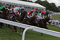 027 Epsom Derby Day - Investec Dash - the field thundering past (18591301611).jpg