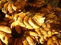 0495Common houseflies eating bananas in the Philippines 25.jpg