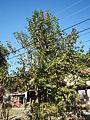 09857jfCuyapo Districts Four Latap Two Center Nueva Ecijafvf 16.JPG