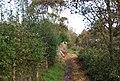 1066 Country Walk along Powdermill Stream - geograph.org.uk - 1577677.jpg