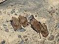 120609 Tykarpsgrottan Bats.jpg
