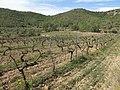129 Vinyes de les Rocasses (Vespella de Gaià).jpg