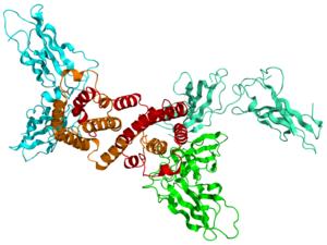Interferon-gamma receptor - Image: 1FG9 IFNG IFNG