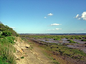 Solent - Salt marsh near Lepe Country Park, with the Isle of Wight in the distance