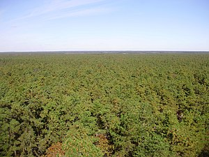 Pine Barrens (New Jersey) - View north from a fire tower on Apple Pie Hill in Wharton State Forest, the highest point in the New Jersey Pine Barrens