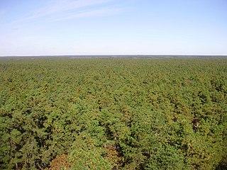 Atlantic coastal pine barrens