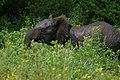 20090507-TZ-NGO Safari 331 (4678002110).jpg