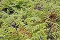 2011-03-05 03-13 Madeira 048 Terreiro da Luta (5542894457).jpg