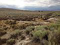2014-07-31 15 41 13 Mud and other remnant debris from flash flooding along U.S. Route 93 in southern Elko County, Nevada.JPG