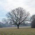 20140119094847 Breitenfurt EVN-Eiche 1311.jpg