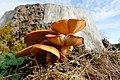 2017-10-25 15-32-55 champignons.jpg
