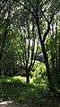 20200614 143810 Park Szarych Szeregów in Łódź June 2020.jpg