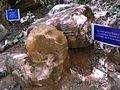 20 million year old fossil wood.jpg