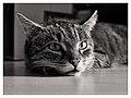 7e3 2230351-sfx-tuna - Flickr - Wolfgang Lonien.jpg