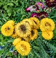 ADD SOME COLOUR TO YOUR LIFE (FLOWERS IN A PUBLIC PARK)-120145 (28650189514).jpg