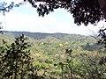 ARBOLES DE CORTES BLANCO EN FLORACION, CANTON LA LIMA EN HUIZUCAR - panoramio.jpg