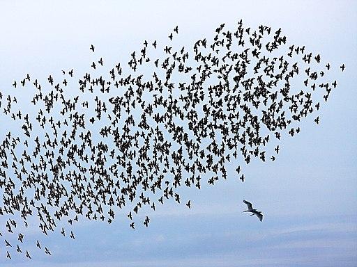 A Flock of Unity