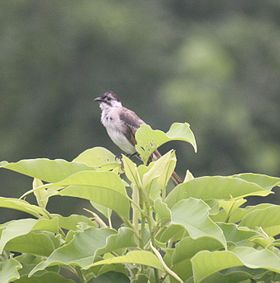 A bird in East Taiwan.jpg