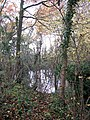 A small pond - geograph.org.uk - 1044033.jpg