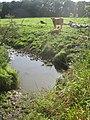 A small stream draining grazing meadows into the Hazon Burn - geograph.org.uk - 1481461.jpg